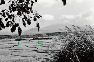 写真3  50年前の田園風景。なだらかな棚田が広がる。1961(昭和36)年9月撮影。