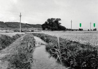 """写真1 50年前の青森市高田の松ノ木(中央)付近。矢印(緑色)が""""つむれ""""。1961(昭和36)年9月撮影。"""