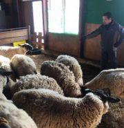 【つながる青森】途絶えかけた羊食文化を次代へ 南部羊プロジェクト/NPO法人階上フロンティア(階上町)【プレゼン】