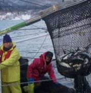 【ココイコあおもり】今、一番熱い漁師に会いに行こう!海峡ロデオ大畑 ぎょ魚!漁獲体験
