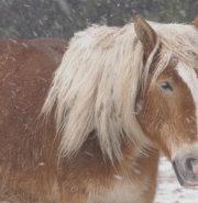 【あおもりニュース@首都圏】2019/2/10 インターン生が監督した映画「寒立馬」が上映されます